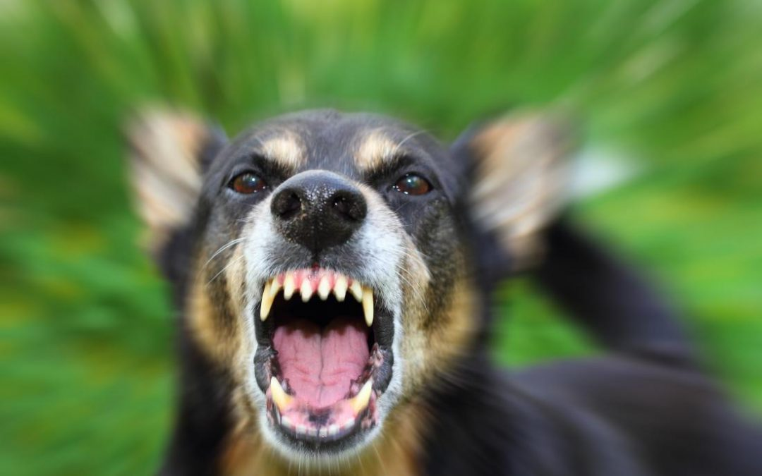 Must read, Breaking the Myths about Rabies in Indonesia